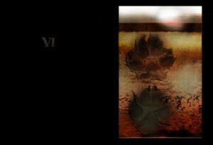 KF8_06_0 Wolves